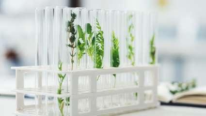 Covid et recherche sur les plantes