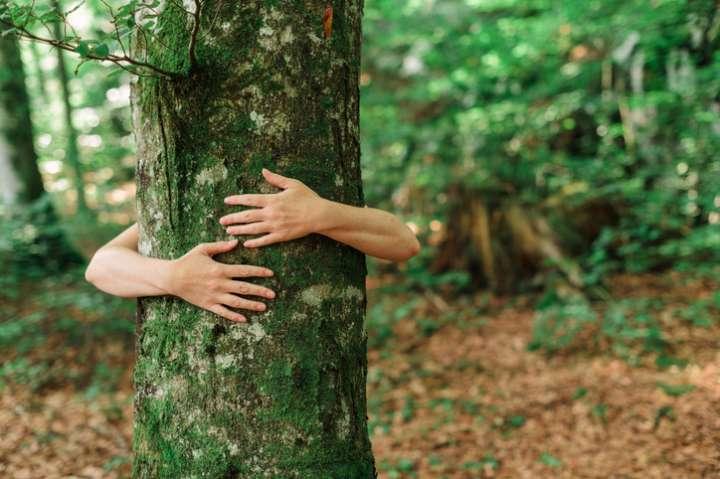 Ressentir l'énergie des arbres avec la sylvothérapie