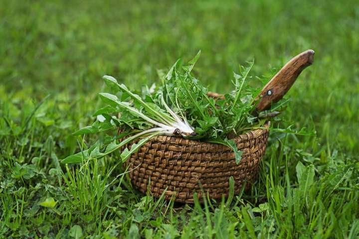 Plantes sauvages contre coronavirus