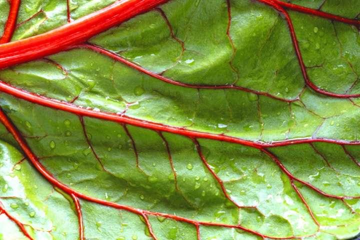La cause principale de l'apparition des varices est un défaut d'étanchéité des valvules veineuses.