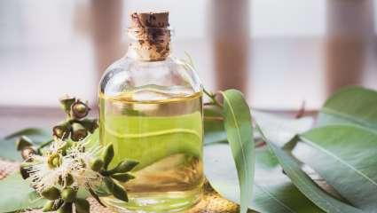 Dégager ses bronches avec l'huile essentielle d'eucalyptus