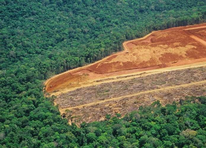 Déforestation et épidémie