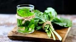 Remède à base de plantain