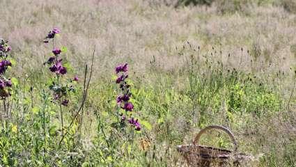 Panier de récolte dans un champs