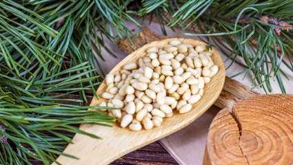 Les vertus santé du pin dans l'alimentation