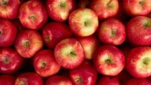 La pomme est un alicament, elle recèle de vertus thérapeuthiques.