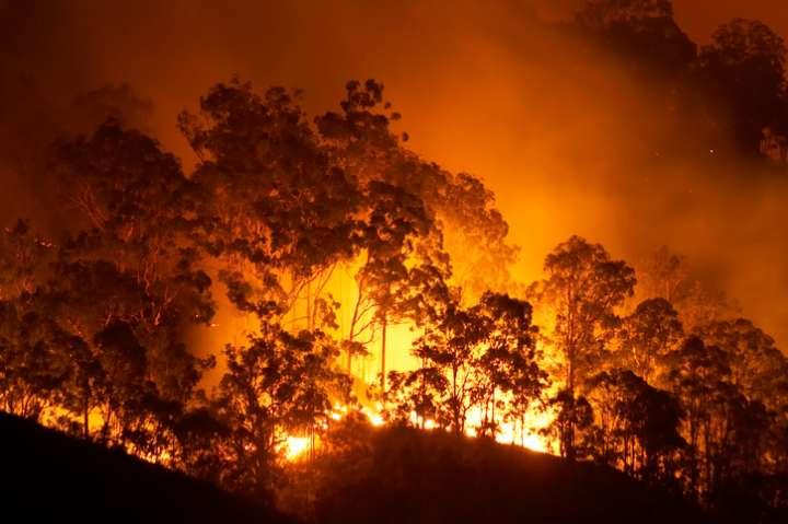 Forêt en feu