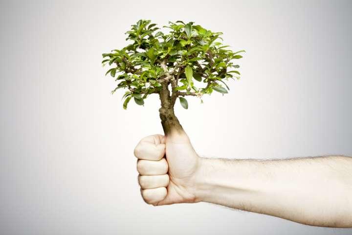 Les plantes aussi ont un sens du toucher