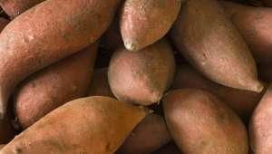 yam (dioscorea villosa)