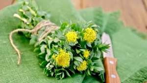 Les plantes contre la fatigue