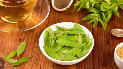plantes médicinales inflammation