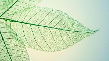 Structure feuille végétaux