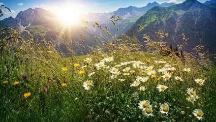 Adaptation flore alpine changement climatique