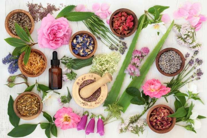 Plantes et médicaments : gare aux interactions !