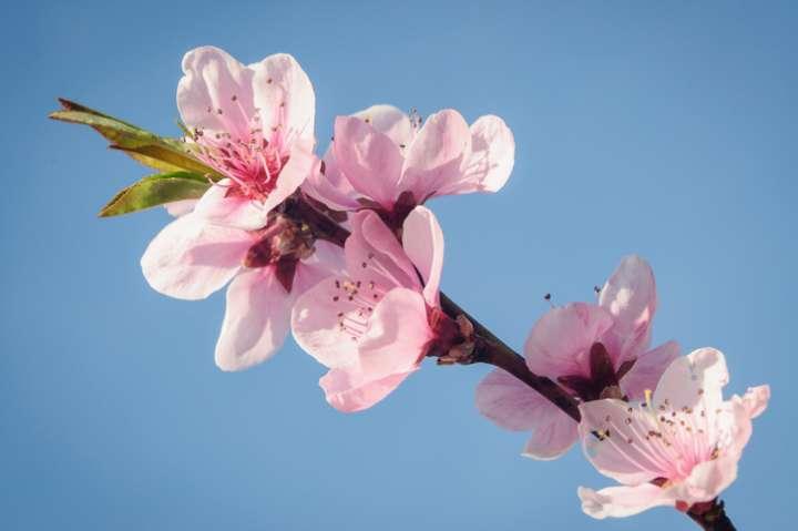 Peur et élixirs floraux