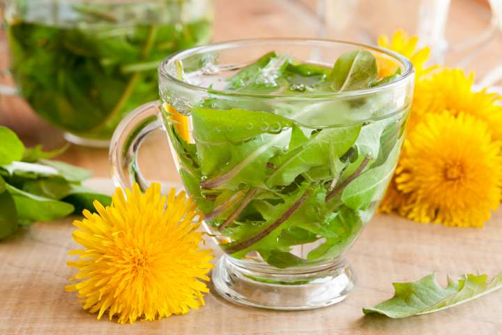 How to use dandelion?  - Plants and Health