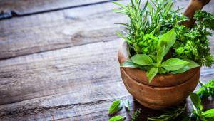 Plantes médicinales