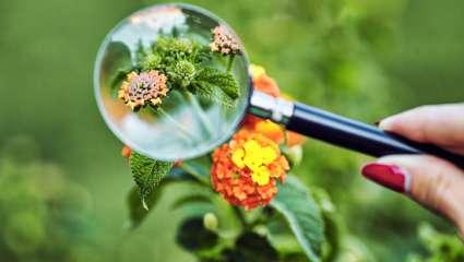 Les plantes capables de choix raisonnés