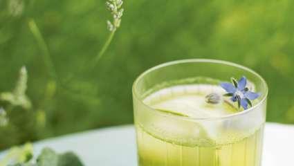 Jus concombre, bourrache et laitue, recette et photo de Michael Isted.