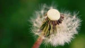 Maladie d'Alzheimer - Se soigner avec les plantes