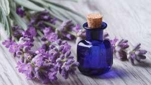 Les huiles essentielles contre les insectes