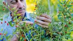 Christophe Bernard, conseiller en herboristerie et en phytothérapie