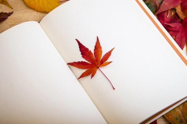 Sélection livres : Envie de mandalas nature