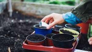 Semis de semences paysannes