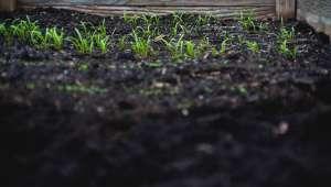 Le secret des plantes urbaines