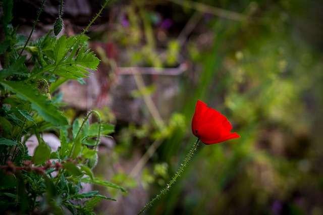 Herbe - Fleur