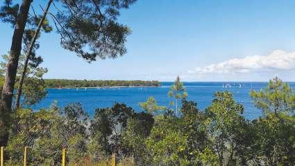 Domaine de Bombannes : océan de pins maritimes