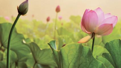 Ces élixirs floraux qui transforment l'ennui