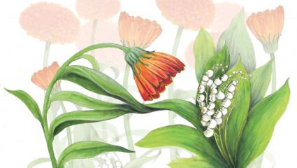 Elixir floral contre l'impolitesse