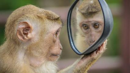 La peau : Effet miroir de notre santé
