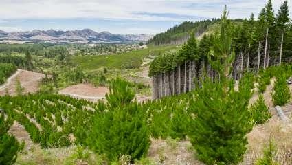 Replantons des arbres, mais pas n'importe où