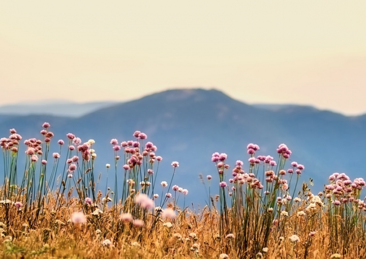 plantes-montagnes