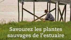 Savourez les plantes sauvages de l'estuaire
