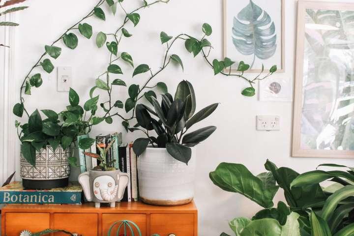 Plantes d'intérieur et soins écolo