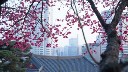 Symbolisme et cycle des saisons au Japon