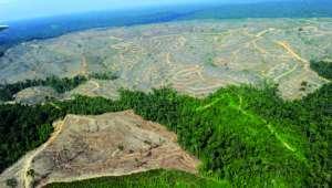 Les terres boisées