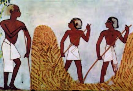 Des Égyptiens ovo-lacto-végétariens ?