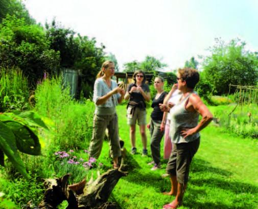 Le jardin d'Hélène