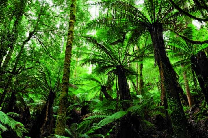 Forêt de Tasmanie