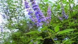 les plantes agissent sur notre système hormonal
