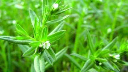 Stimuler les glandes endocrines avec les plantes
