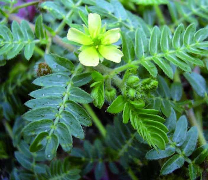 Synthèse hormonale Action indirecte des plantes