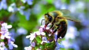 Bernard Descottes, le miel et le scalpel
