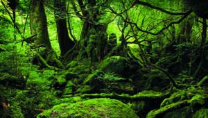 nature japonaise