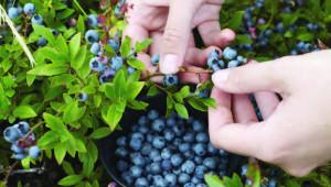 fruits secs et santé