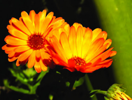C'est nouveau : Baume Secours, Naturactive, L'Herbier de France et les Aroma Box